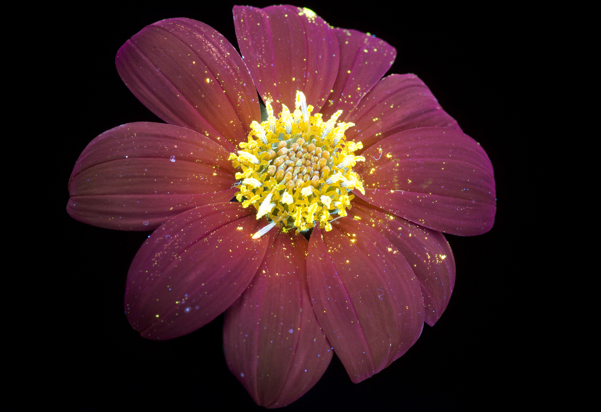 Glowing Flowers by photographer Craig Burrows #artpeople